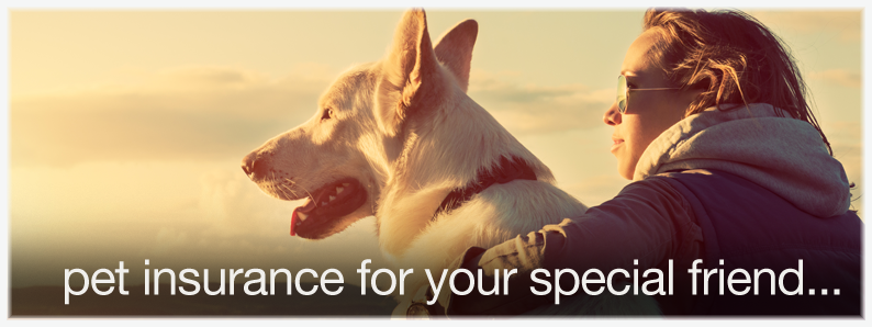 Pet Insurance, Invictus at Home - Telecoms - Insurance - Utilities